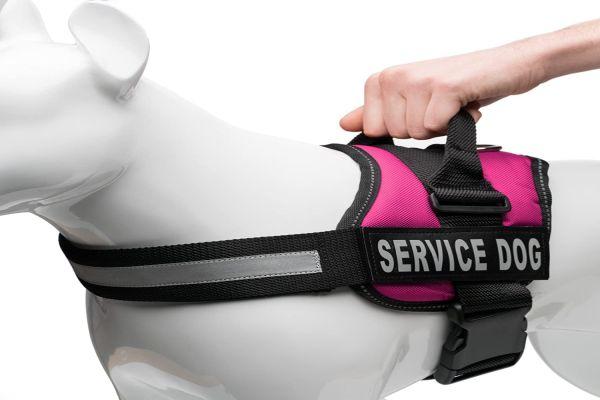 Ứng dụng của băng gai dính (hook and loop tape) trong lĩnh vực phụ kiện thú cưng